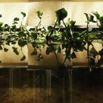 orto botanico - periperi catania