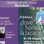 Jacaranda - PeriPeri - Eventi a Catania